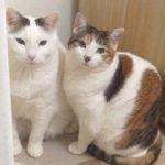 猫がドア開けると寒い… 猫の飼い主必見!家庭用自動ドア閉め機